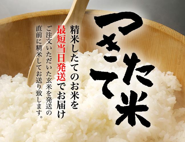 お米が美味しい新潟県だから、B級グルメのタレカツ丼が愛されているのもわかりますね