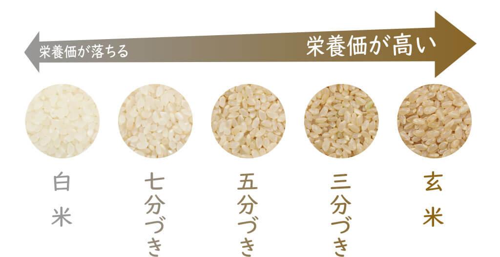 玄米は栄養価が高く食物繊維も豊富な為簡単なダイエット向き食品として人気です