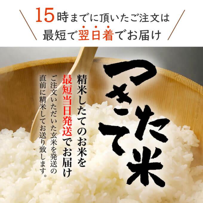 大人気の売れ筋お米たちは、精選した玄米を精米して、すぐに発送しております