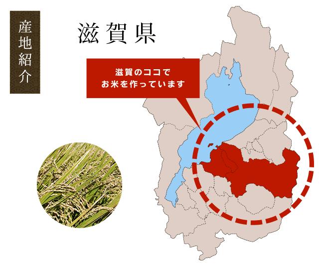 新米みずかがみ|滋賀県東近江産のお米